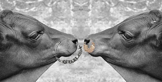 Sumit Mehndiratta - Animal Royalty 1 Holy cow