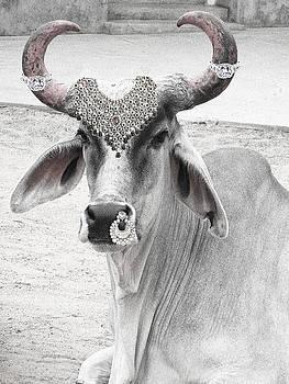 Sumit Mehndiratta - Animal Royalty 6