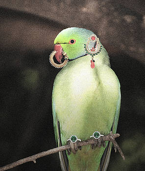 Sumit Mehndiratta - Animal royalty 9