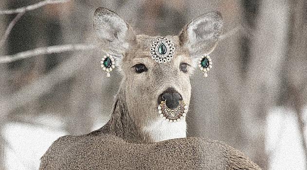Sumit Mehndiratta - Animal Royalty Series 5