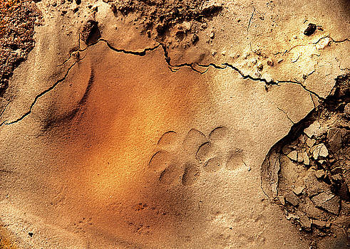 Animal Tracks 2 by Barbara D Richards