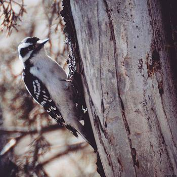 #animals #allmightybirds #allnatureshot by Kerri Ann Crau