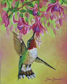 Anna's Hummingbird 3 by Jane Girardot