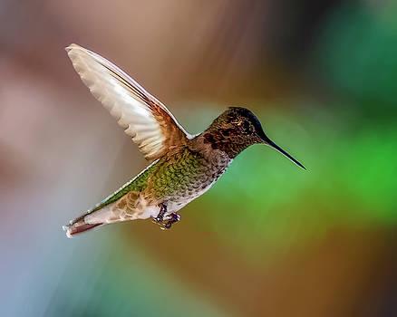 Anna's Hummingbird h1816 by Mark Myhaver