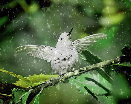 Anna's Hummingbird Rare Leucistic by Pamela Rose Hawken