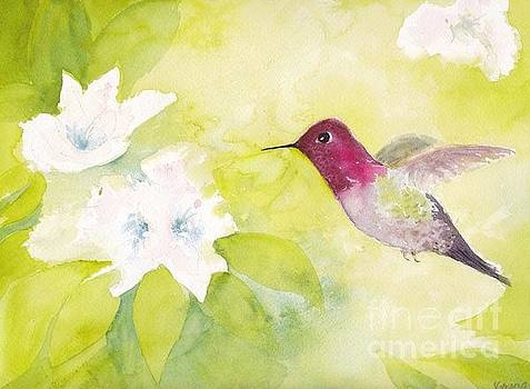 Anna's Hummingbird by Yohana Knobloch