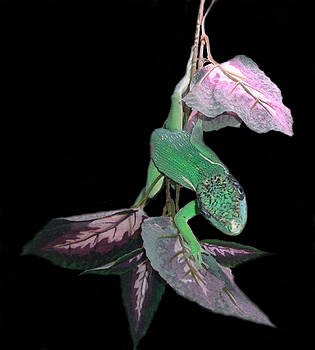 Anole by Chris Hedges