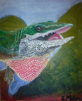Anole by Stormy Miller