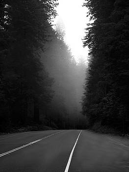 Another Foggy Morning on the Redwood Highway by Joe Schofield