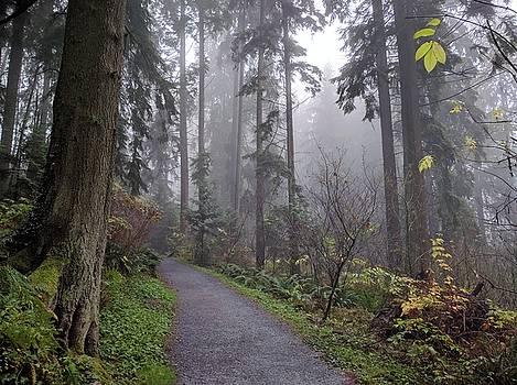 Another Hobbiton path down SFU by Jordan Barnes