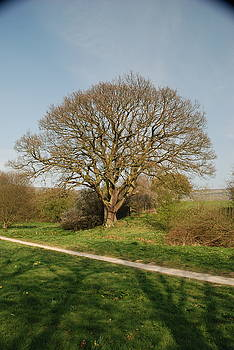 Doug Thwaites - Another Tree in Farndale