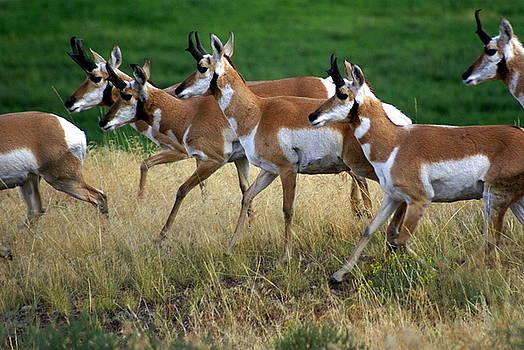 Marty Koch - Antelope 1