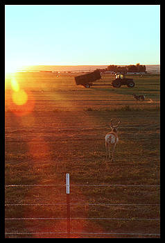 TNT Images - Antelope #2 - 300012