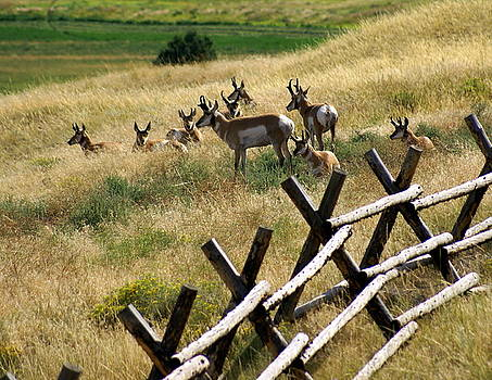 Marty Koch - Antelope 2