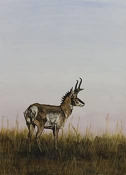 Antelope by Laurie Tietjen