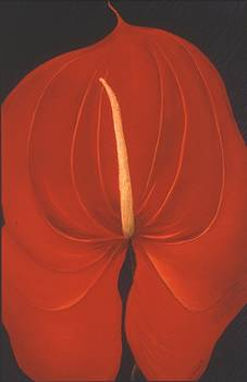 Mary Erbert - Anthurium