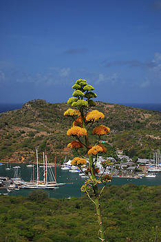 Gary Wonning - Antigua National Flower