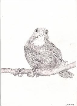 Antillean Bullfinch by Laura Mort