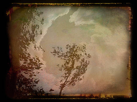 Aimee L Maher ALM GALLERY - Antique Amber Into The Sky