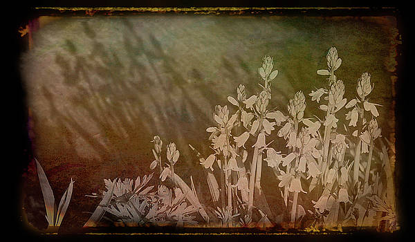 Aimee L Maher ALM GALLERY - Antique Amber Shadows