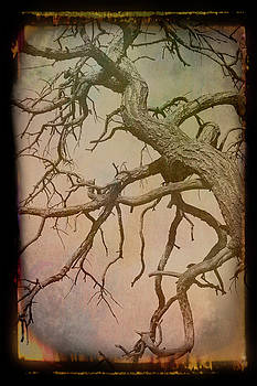 Aimee L Maher ALM GALLERY - Antique Amber Twisted Branches in the Sky