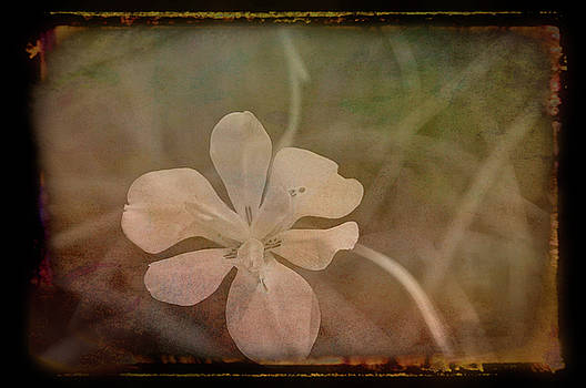 Aimee L Maher ALM GALLERY - Antique Amber White Petals