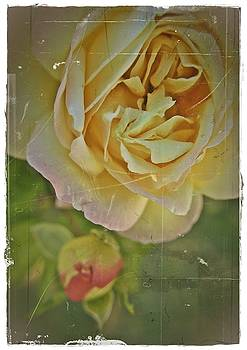 Antique Roses by Theresa Higby