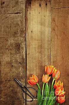 Antique Scissors and Tulips by Stephanie Frey