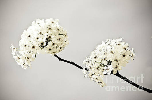 Antiqued Flowers by Justin Bower