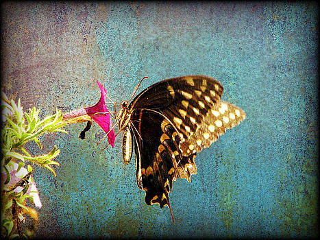 Antiqued Swallowtail by Dottie Dees