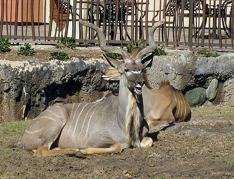 Antler Envy by Camera Candy