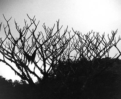Muyiwa OSIFUYE - Antler Reindeer Shrub