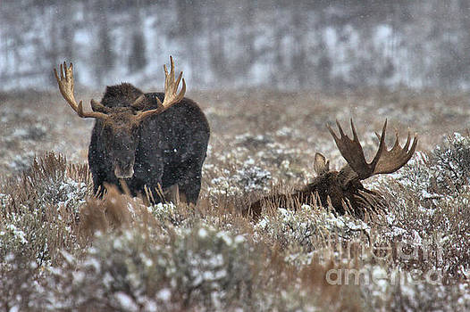 Antlers In The Brush by Adam Jewell