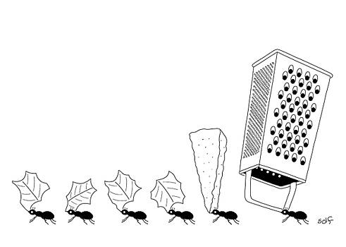 Ants with Cheese Grater by Seth Fleishman