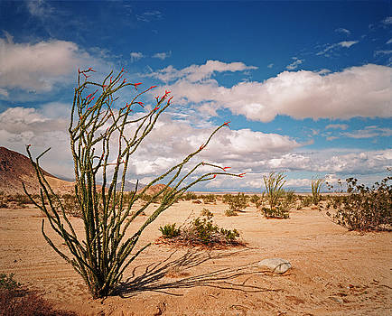 Anza Borrego Desert by James Rasmusson