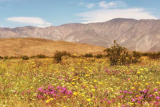 Anza Borrego Desrt Flowers by Michael Hope