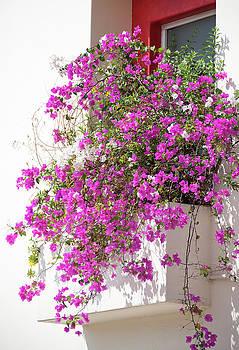 Ramunas Bruzas - Apartment With Flowers