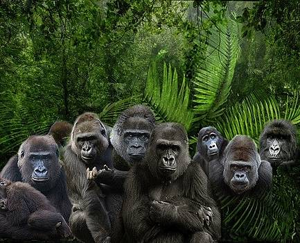 Ape Gathering by Michael Pittas