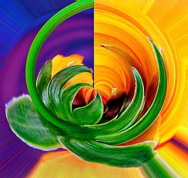 Rick Strobaugh - Aphid Hidden in Flower