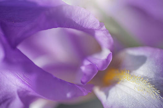 Jenny Rainbow - Aphrodite Macro 2. The Beauty of Irises
