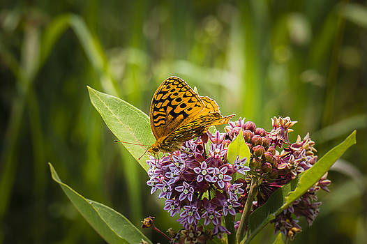Aphrodite on Wildflower by Jorge Perez - BlueBeardImagery