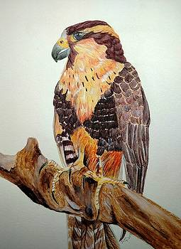 Aplamoda Falcon by Joan Mansson