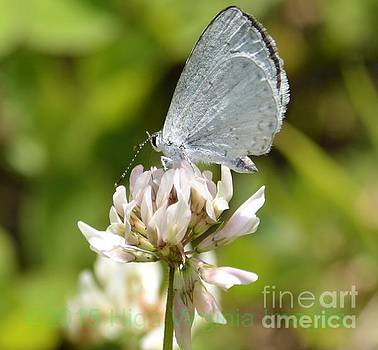 Appalachian Azure by Randy Bodkins