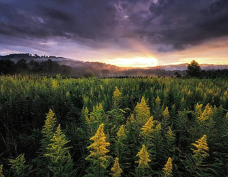 Appalachian Mountains - Golden Rods and Golden Sunsets by Jason Penland