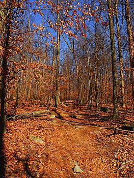 Appalachian Trail in Maryland 4 by Raymond Salani III