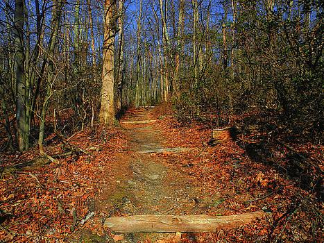 Appalachian Trail in Maryland Steps by Raymond Salani III