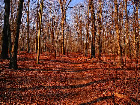 Appalachian Trail in Maryland Lambs Knoll by Raymond Salani III