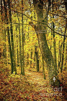 Dan Carmichael - Appalachian Trail in the Blue Ridge in Autumn AP
