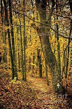 Dan Carmichael - Appalachian Trail in the Blue Ridge in Autumn