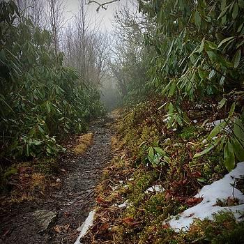 Appalachian Trail by William Sullivan
